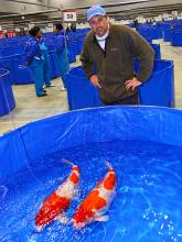Randall at the 41st. All Japan Koi Show