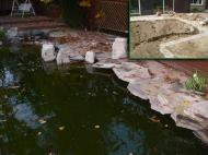pool pond conversion