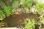 Another classic rebuild to include a bottom drain and vortex. Withing a week this pond was crystal clear