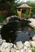 I visited this pond we built last year for some servicing and everything is maturing nicely