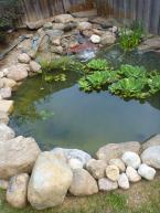 We finished rebuilding this pond about 3 weeks ago and the client is thrilled