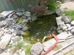 A classic rebuild. This pond didn't utilize the space well. The skimmer was poorly positioned