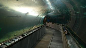 A visit to the Aquarium of the Bay is recommended