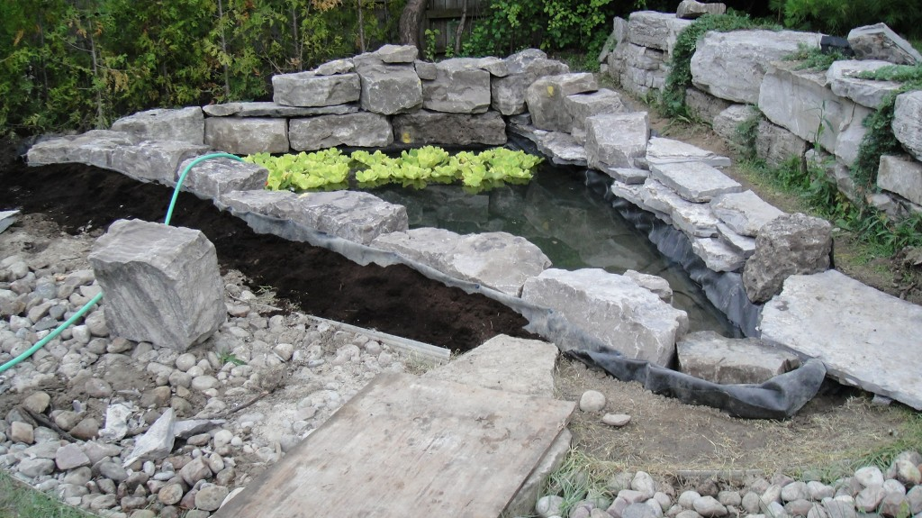 pond-without-plants.jpg
