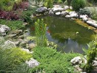 With the stone in the water and plantings, a pond looks better